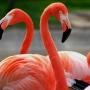 Se venden lindos Flamingos!!