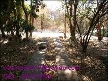Fotos de Vendo hermoso terreno en cataratas uxmel, km. 79,5 autopista a puerto quetzal 3