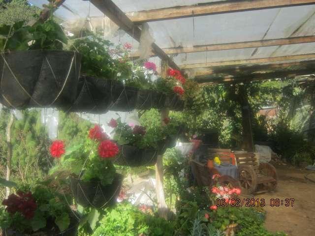 Flores, jardines , decoracion, hortencias, abonos en San Pedro