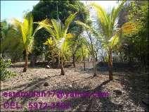 Fotos de Vendo hermoso terreno en cataratas uxmel, km. 79,5 autopista a puerto quetzal 1