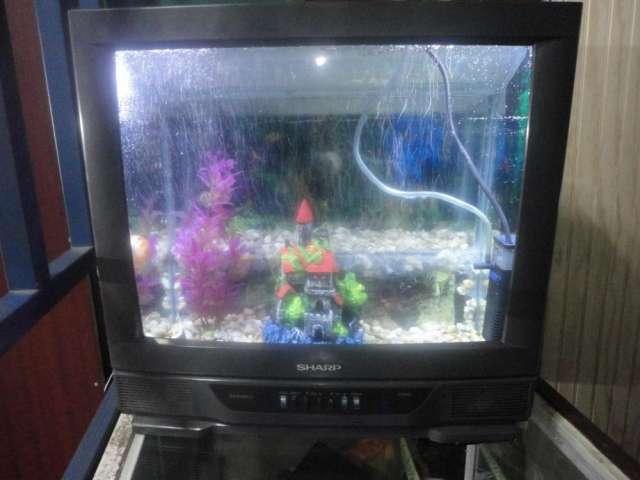 Vendo acuario televisor de 21 pulgadas equipada q.900.00